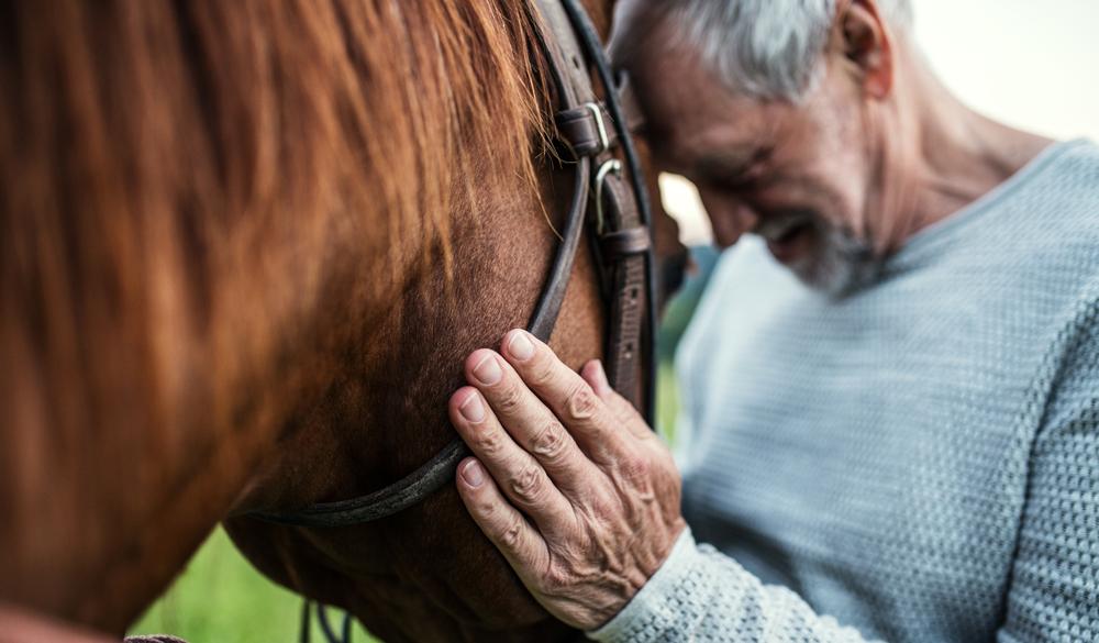 CBD Öl für Pferde: Einsatz, Dosierung & Anwendung