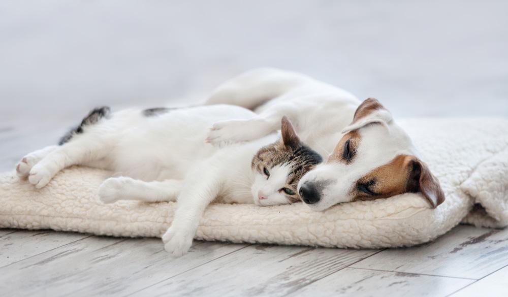 CBD Öl für Hunde & Katzen – Einsatz, Dosierung & Studien